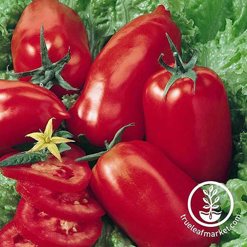 A close up of the 'Amish Paste' tomato variety pictured on a lettuce leaf. To the bottom right of the frame is a white circular logo with text.