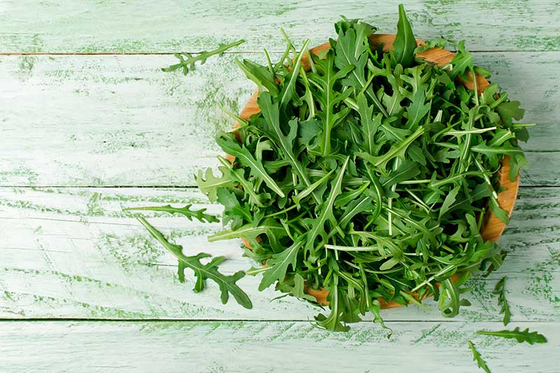 A close up of fresh arugula in a wooden bowl set on a rustic green wooden surface.