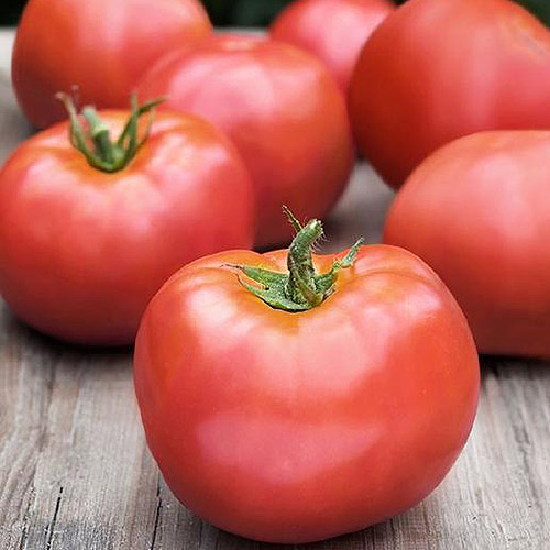 A close up of 'Atkinson' tomatoes, freshly harvested and set on a wooden surface.