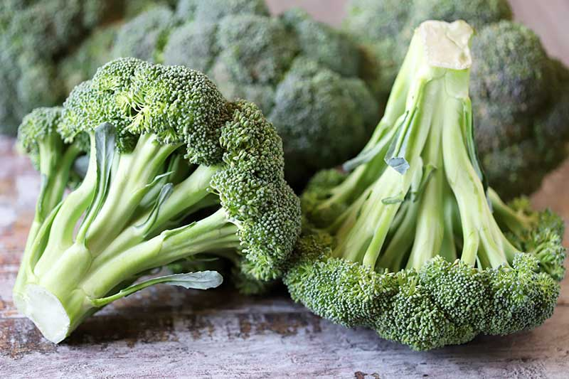 A close up of freshly harvested broccoli heads set on a wooden surface on a soft focus background.