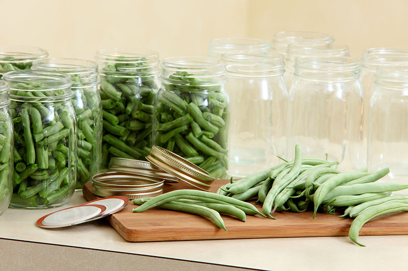 A wooden chopping board with bush beans ready to be chopped and placed in the jars behind for canning.