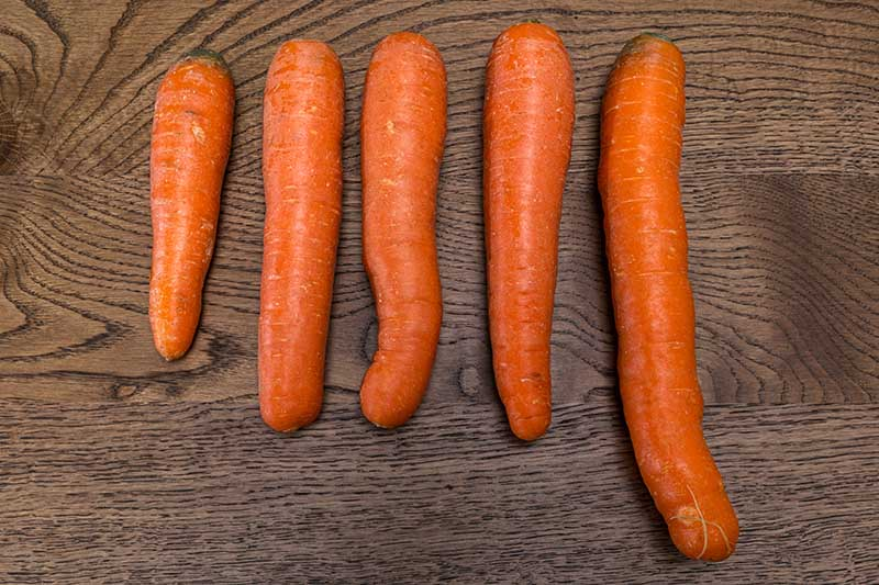 A selection of five different carrots, each of a different length, set on a wooden surface.