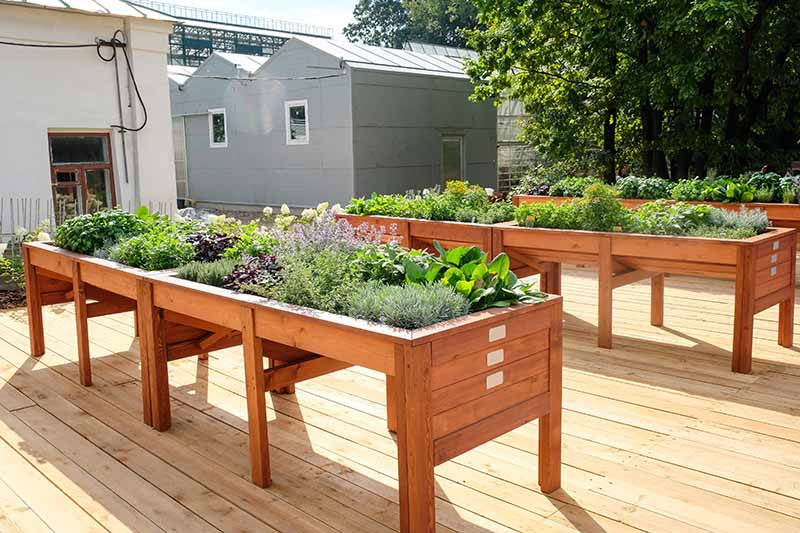 A wooden deck with raised garden beds growing vegetables and herbs.
