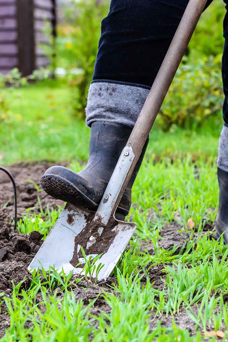 A vertical close up picture of a man's boot pushing a spade into the soil, on a soft focus background.