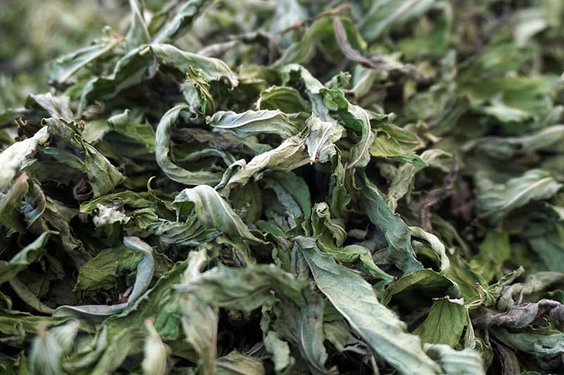 A close up of dried mint leaves on a soft focus background.