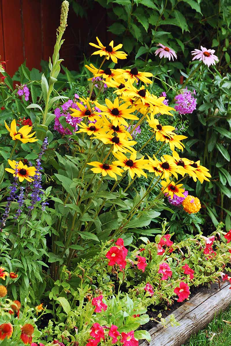 A vertical close up picture of a border with a variety of different flowering plants that attract pollinators.