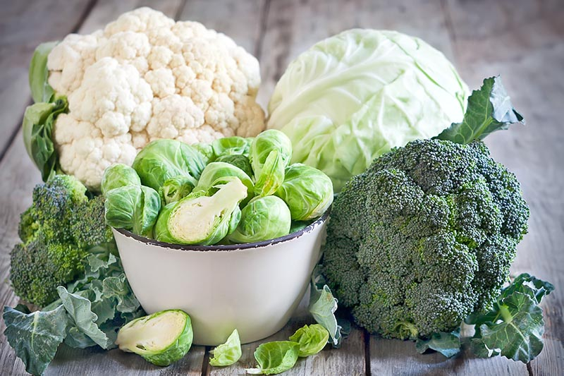A close up of various Brassicas freshly harvested and set on a wooden surface.