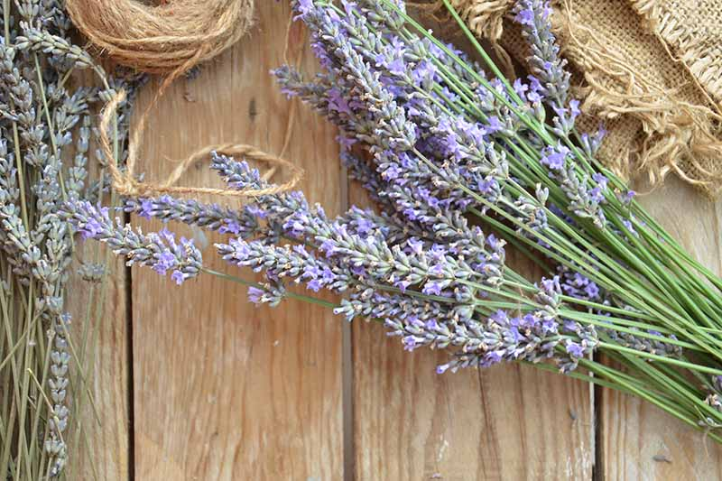 A close up of freshly cut lavender flowers set on a wooden surface.