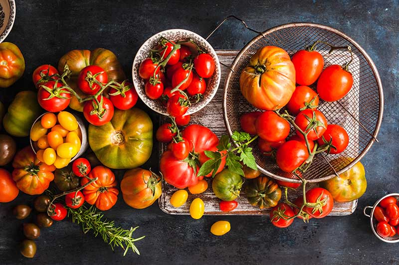 A top down close up picture of a large harvest of various different types of tomato in an array of colors, shapes, and sizes, set on a gray background.