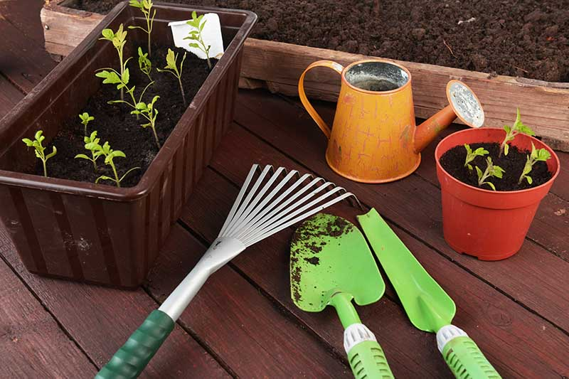 A close up of various gardening tools for indoor gardening with a watering can, pots and seed starter trays, and small hand tools, set on a wooden surface.