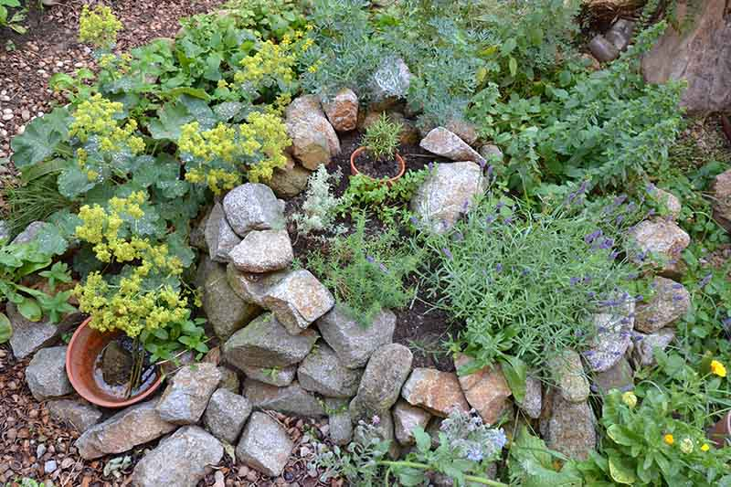 A top down picture of a rockery in the garden growing herbs.