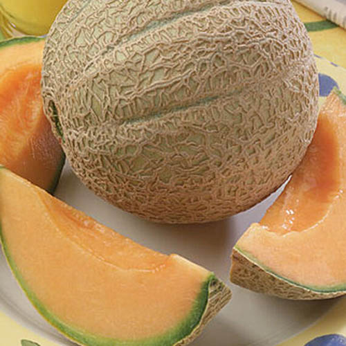 A close up of 'Hearts of Gold' melon set on a white plate with slices in front and to the sides.