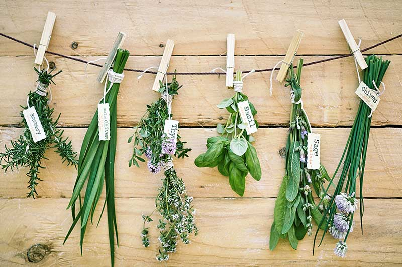 A close up of freshly harvested herbs from the garden hanging upside down from a piece of string to dry, with a wooden wall in the background.