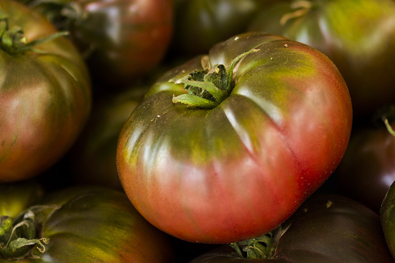 A close up of a large 'Cherokee Purple' tomato with red skin that is green around the stem, on a soft focus background.