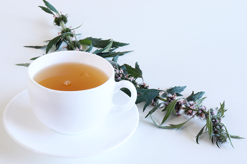 A close up of a white tea cup containing motherwort tea with a sprig of herbs next to it, set on a white surface.