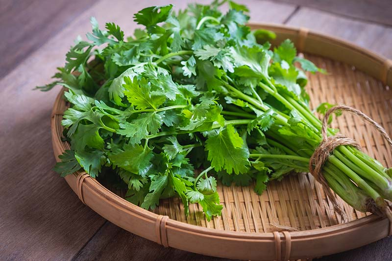 A close up of a bunch of parsley set on a wicker tray on a wooden surface.