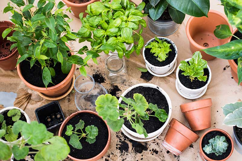 A top down picture of various pots containing different plants and soil scattered around them.