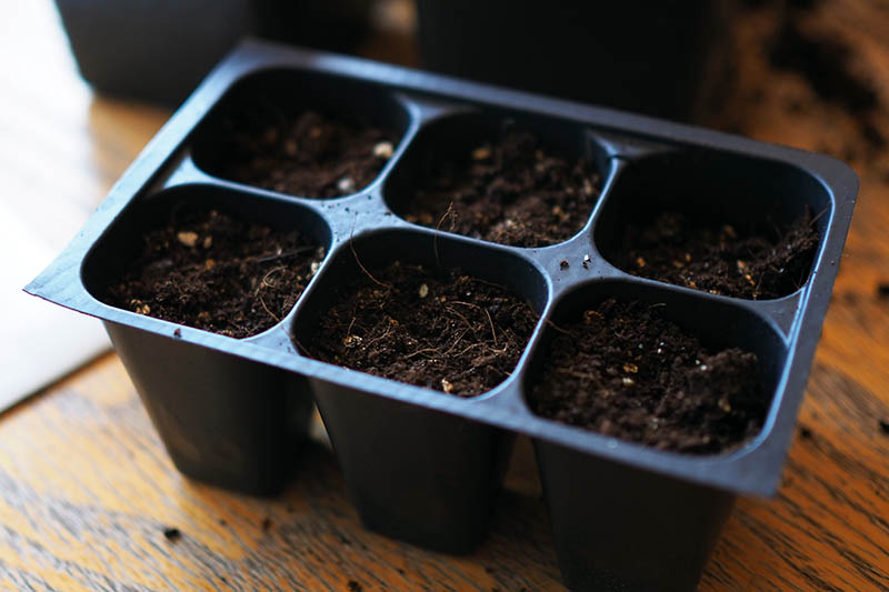 A close up of a six-cell black plastic planting tray set on a wooden surface on a soft focus background.