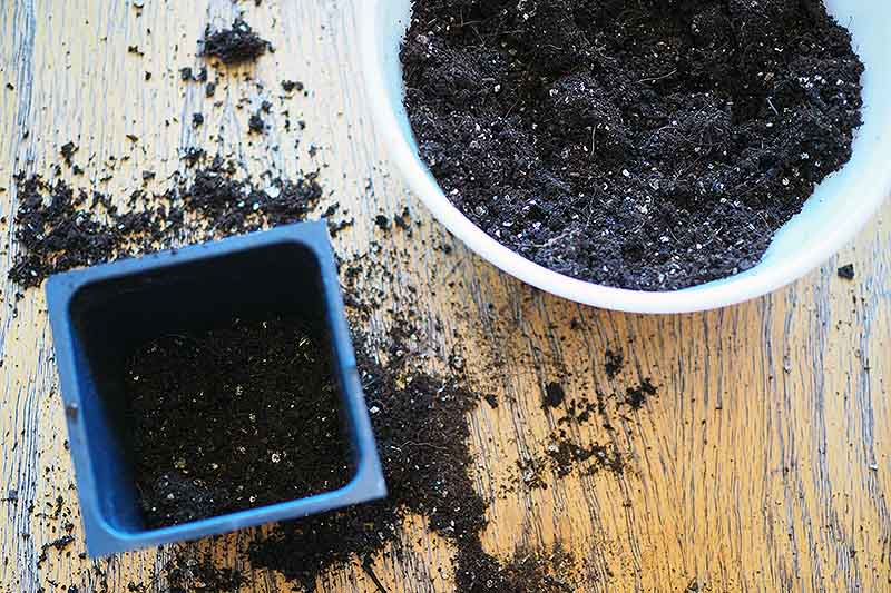 A close up top down picture of two containers filled with rich potting soil set on a wooden surface.