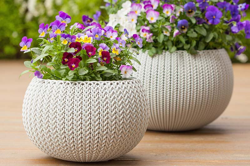 A close up of two decorative pots with brightly colored violets in full bloom set on a wooden surface, fading to soft focus in the background.