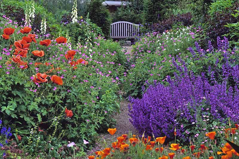 A close up of a path through a garden flanked on both sides by a dazzling array of flowering plants. In the background is a bench seat and a house in soft focus.
