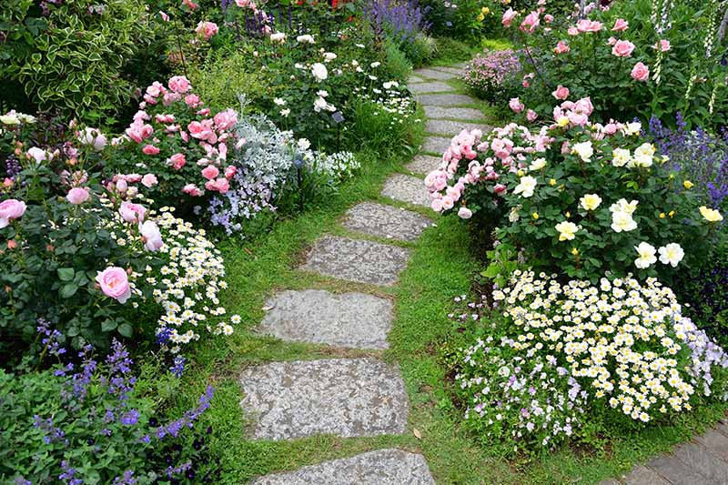 A concrete path meandering through a flower garden, between two borders with different plants in bloom.