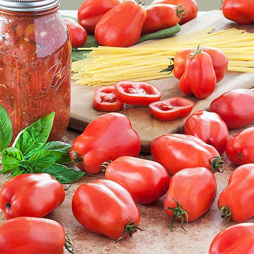 A close up of a chopping board with 'San Marzano' tomatoes scattered around, with dried pasta ready for cooking and to the left of the frame is a jar of freshly prepared sauce with a sprig of basil.