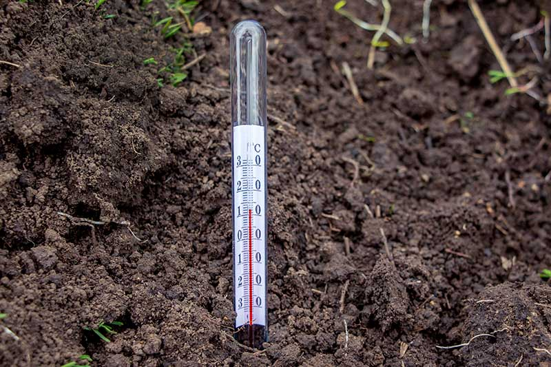 A close up of a glass soil thermometer monitoring the outdoor temperature in the garden.