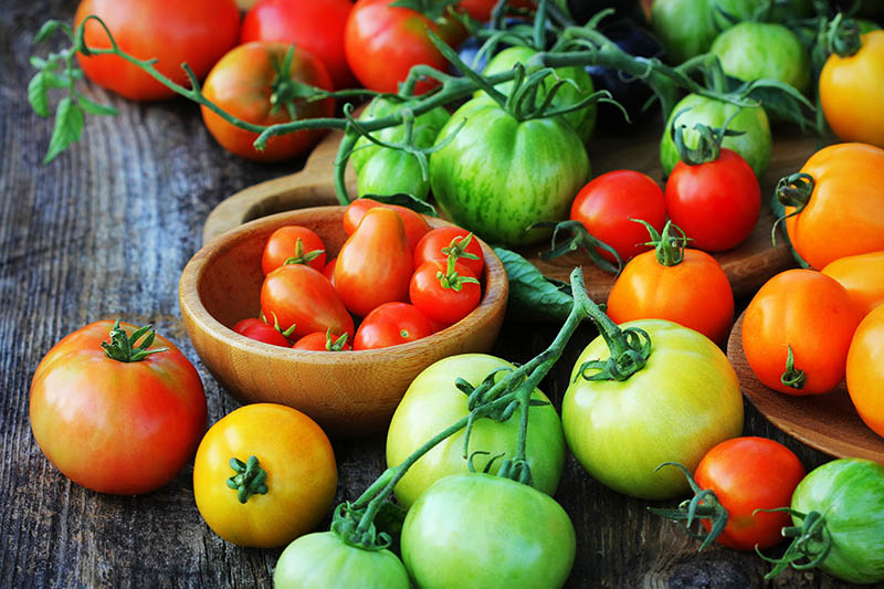 A close up of a variety of wooden bowls containing various different tomatoes freshly harvested from the garden set on a wooden surface.