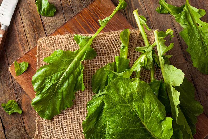 A close up of turnip greens freshly harvested and washed and set on a burlap fabric on a wooden chopping board.