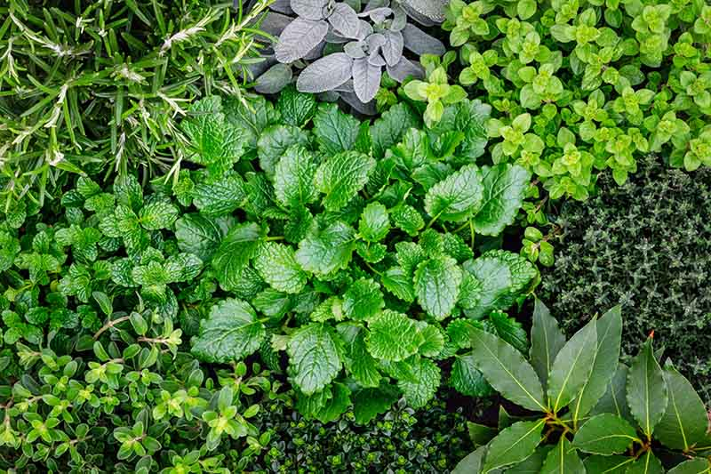 How to Start Your Own Herb Garden | Gardener's Path