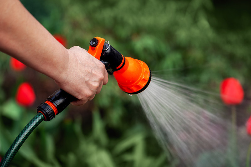 A close up of a hand from the left of the frame holding a garden hose with a spray attachment, watering the garden, on a green soft focus background.