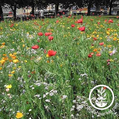 A close up of a meadow of wildflowers of various colors, in the background is trees and houses in soft focus. To the bottom right of the frame is a white circular logo and text.