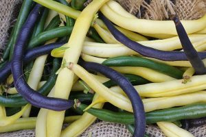 35 of the Best Bush Bean Varieties