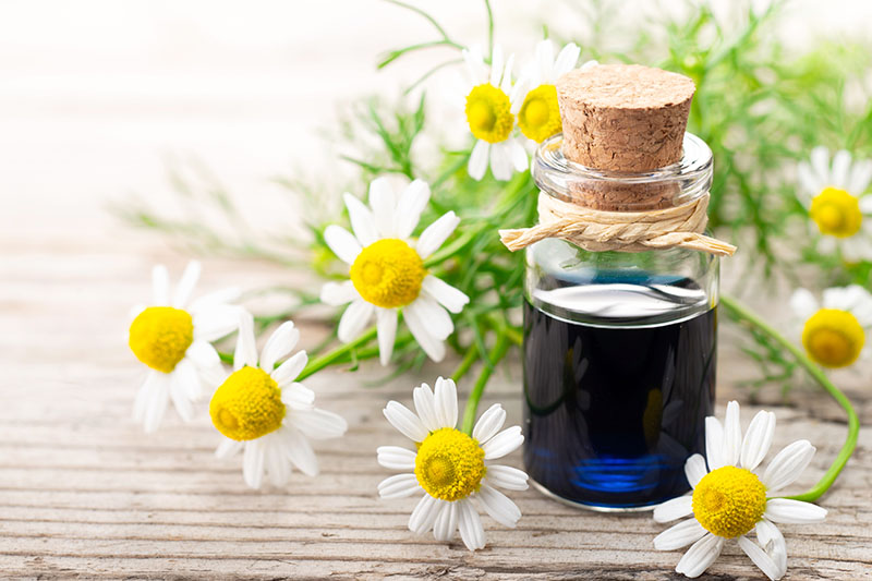 A close up of a small glass jar containing blue essential oil set on a wooden surface with white flowers in the background.