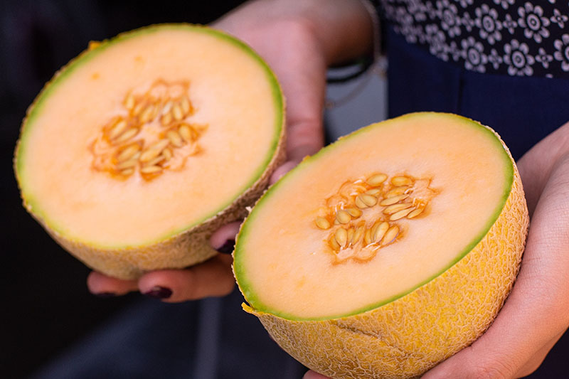 "A close up of two hands each holding one half of a Cucumis melo, with orange flesh and characteristic ""netting"" on the outside of the rind."