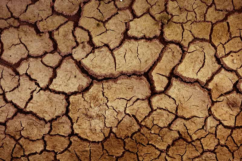 A close up picture of clay soil that has dried out and is cracking.