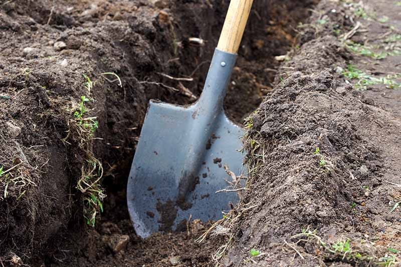 A close up of a spade digging a large trench in the earth ready for planting.