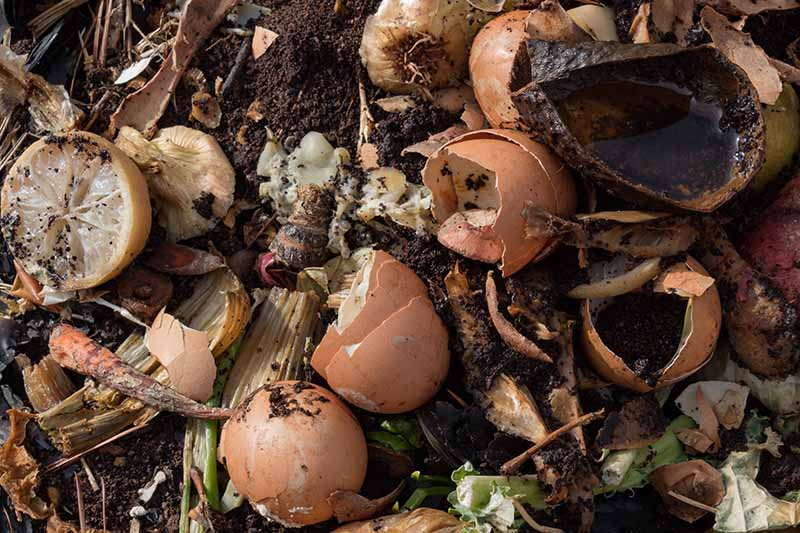 A close up of rotting food waste on a compost pile with dark soil in the background.