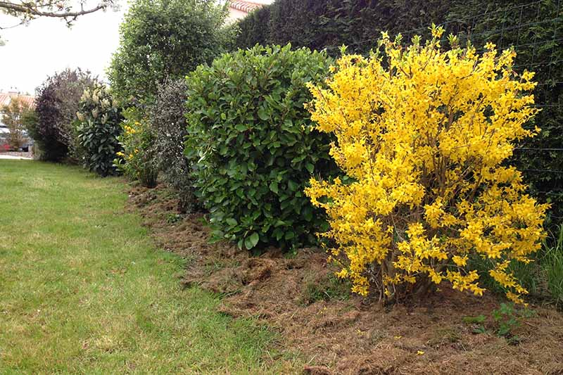 A mixed planting of ornamental shrubs to create a hedge.