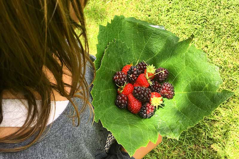 A close up of a woman holding a large green leaf containing a variety of freshly picked berries, with grass in the background in bright sunshine.