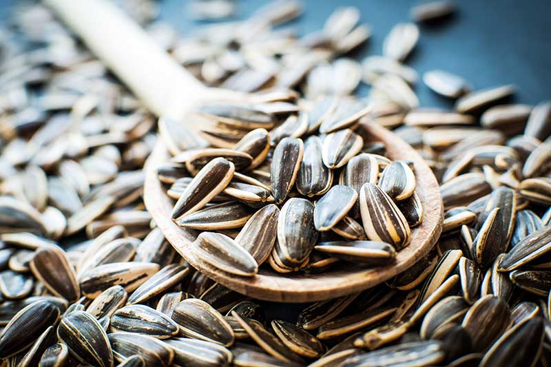 A close up of a wooden spoon and freshly harvested sunflower seeds on a soft focus background.