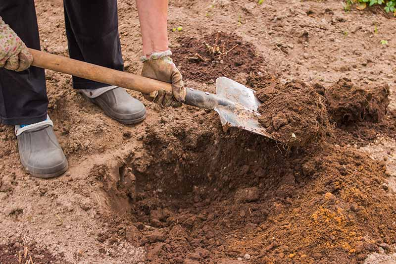 A close up of two hands from the left of the frame holding a garden shovel digging out dense clay soil.