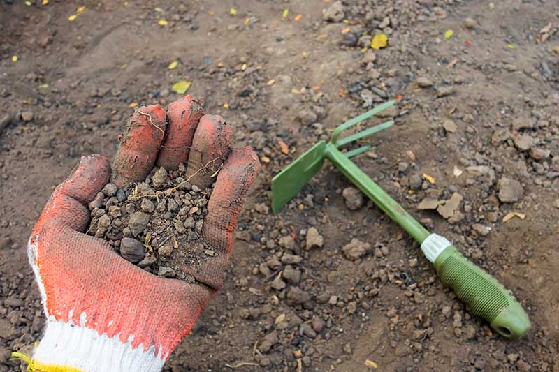 A close up of a hand from the left of the frame wearing an orange gardening glove holding a handful of soil, with a garden trowel to the right of the frame and soil in the background.
