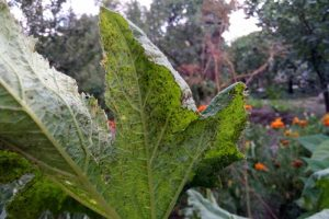 How to Identify and Control Zucchini Plant Pests