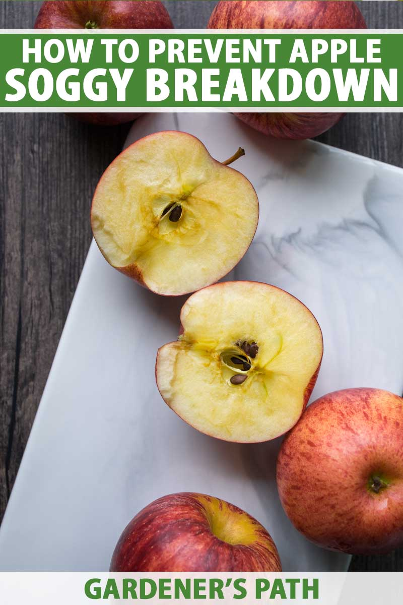 Top down view of Honeycrisp apples that have been sliced open to show soggy breakdown disorder. To the top and bottom of the frame is green and white printed text.