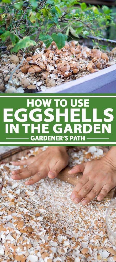 A collage of photos showing eggshells being used in a garden.