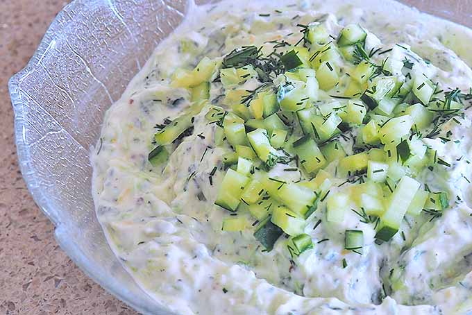 A close up of a white bowl with a freshly made, creamy tzatziki dip set on a kitchen counter.