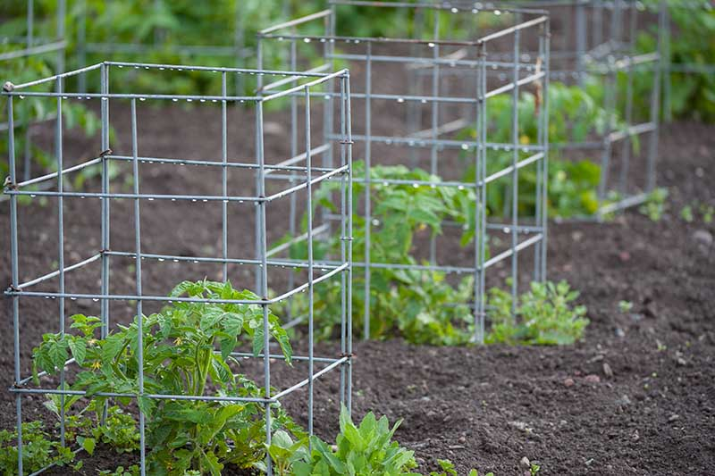 A close up of small metal cages used in the garden to support seedlings.