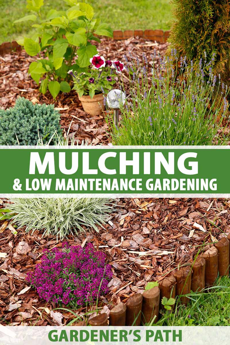 A vertical image, showing a flower bed with a wood surround, containing green and flowering plants and wood bark mulch, in light sunshine. Green and white text in the center and at the bottom of the image.